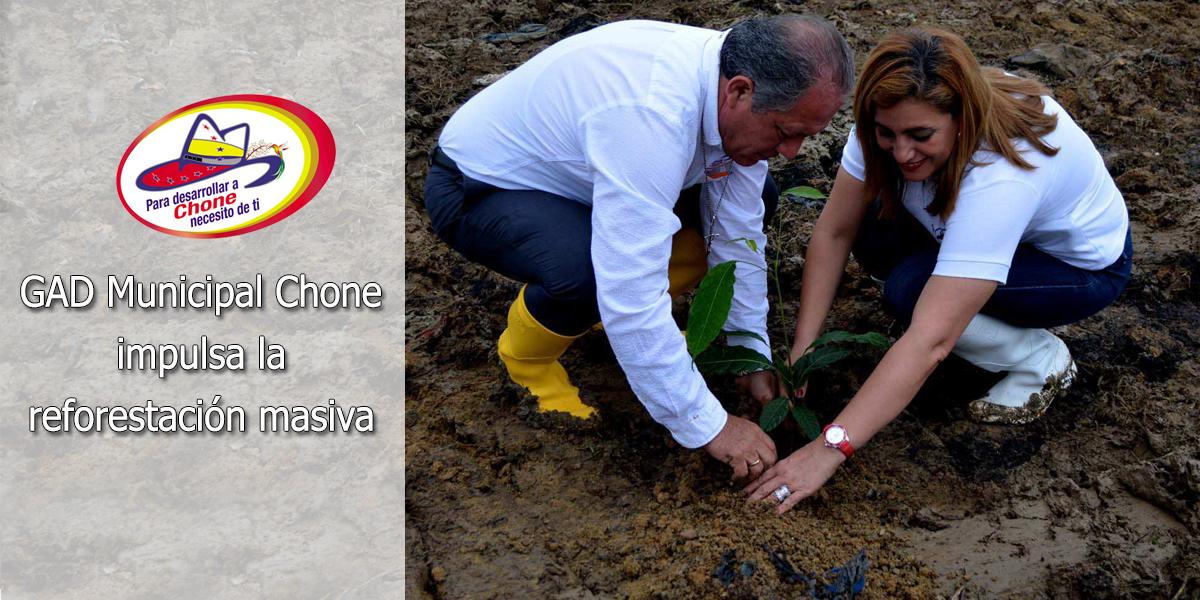GAD Municipal Chone impulsa la reforestación masiva