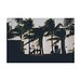 Miami, 2016 by David G. Ouellette