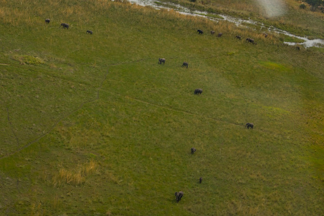 Elephants from the air