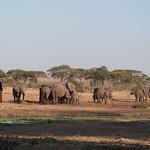 Los elefantes ya han bebido