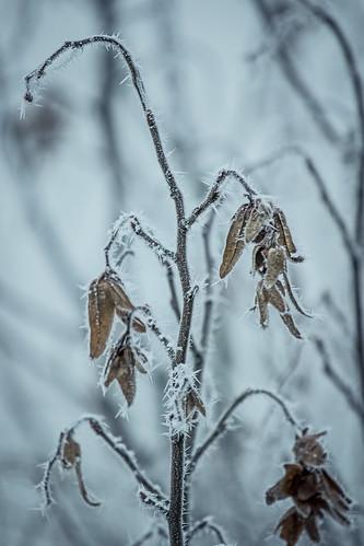 Winter-Is-Comming.jpg