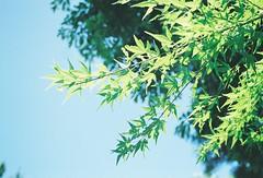 葉と光02