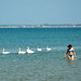 Swans on the Galway City beach by Kira Pichano
