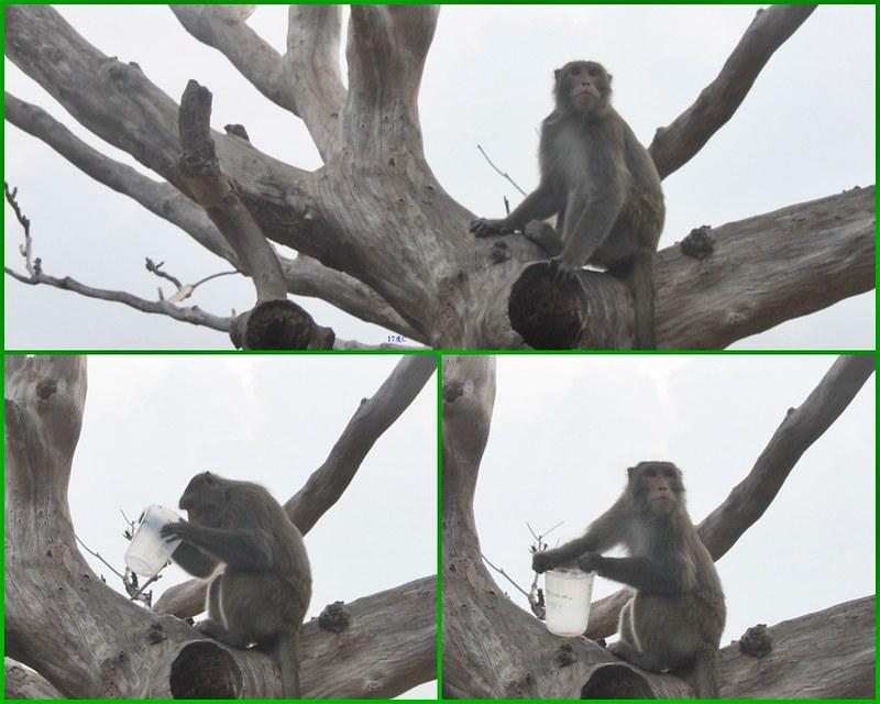 環島-西子灣-夕陽與猴子共舞 (48)