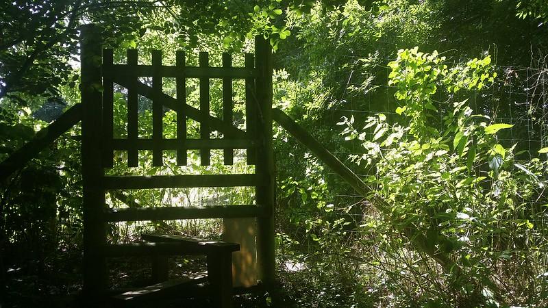In deer territory #Wealdway #sh