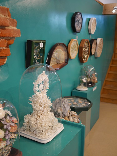Shell Museum - 1