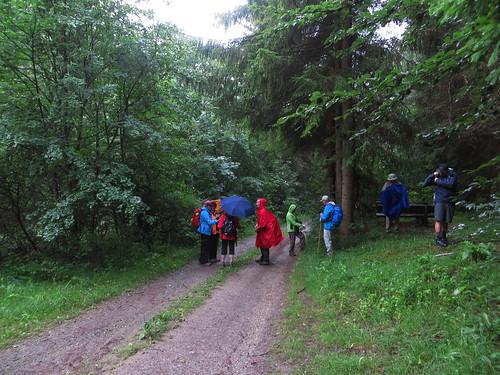 20150727 02 261 Romea Wald Weg Pilger