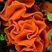 Orange Peel Fungus Aleuria aurantia by Joan's Pics 2012