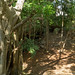 40. Cenotes, Yucatan, Mexico-14.jpg por gaillard.galopere
