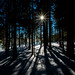 (c) Wolfgang Pfleger-4193 by wolfgangp_vienna
