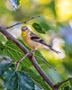 Birds (388)