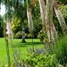 Hilltop Garden (02) by Padski1945