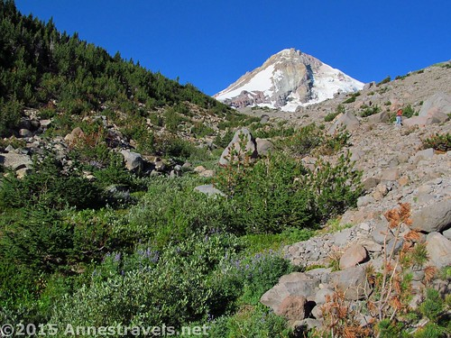 Some of the first views of Mt. Hood on the Cooper Spur Trail, Mount Hood National Forest, Oregon