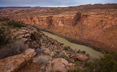 Colorado River Canyon (1-22-17)