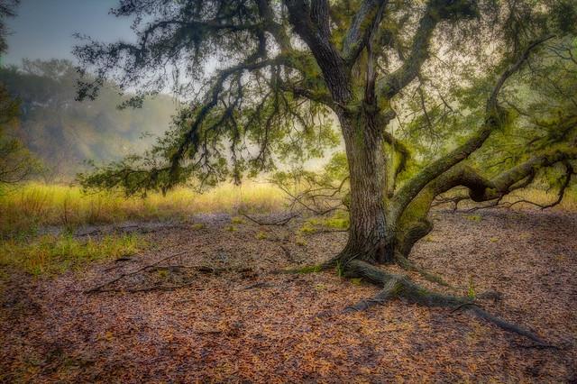 Rugged oak, gentle light