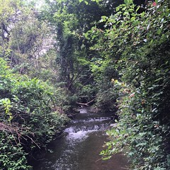 nature reserve, stream, woodland, rainforest, river, riparian forest, old-growth forest, creek, forest, natural environment, ravine, state park, jungle, vegetation,