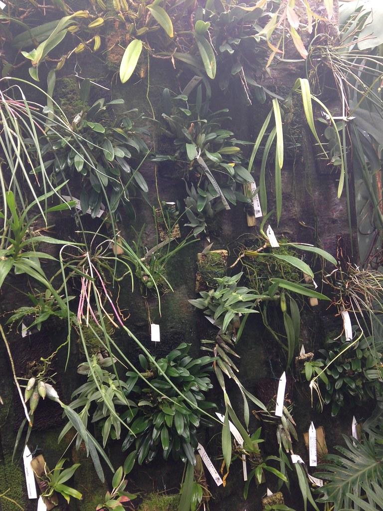 Orchidarium de Prangins 19306405055_edc745862a_b