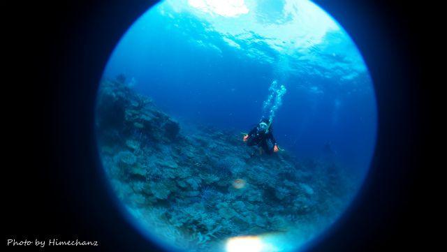 極上サンゴキレイゾーンでのんびり遊泳♪