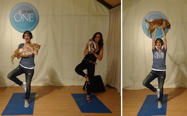 cat-yoga-7-31-15