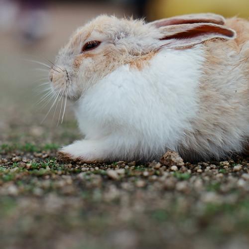 目を細めるウサギ