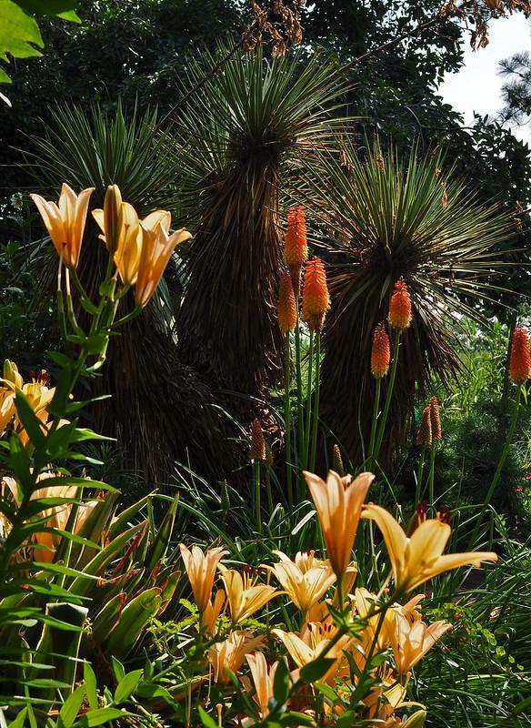 Lilium, Kniphofia, Yucca