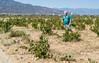 DSC04900 - Pygmy Zin Vines