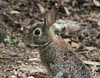 backyard bunny by victoriaadev