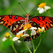 Gulf Fritillary Butterfly by all one thing (not quite catching up...)