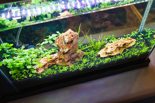 high tech planted spec v aquarium