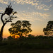 Pantanal sunrise (Tim Melling)