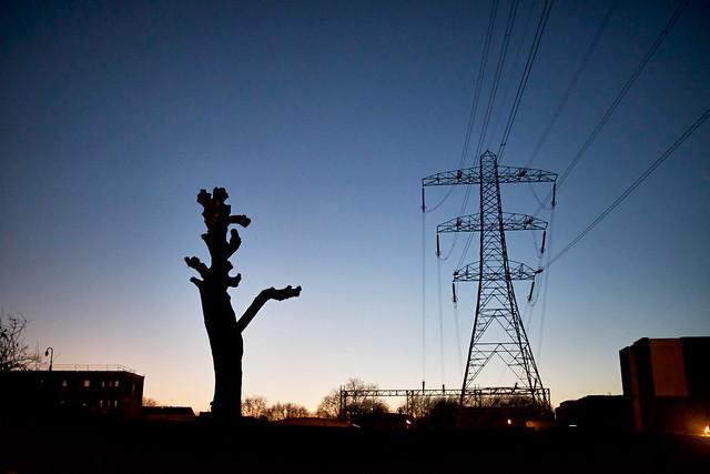 Tree stump and Pylon