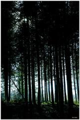Les bois noirs - Photo of Saint-Malon-sur-Mel