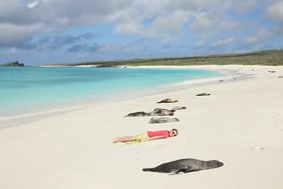 Galapagos Fur Seals.  Espanola Island, Ecuador.