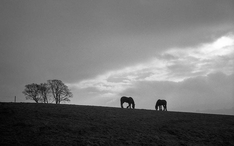 FILM - Horses
