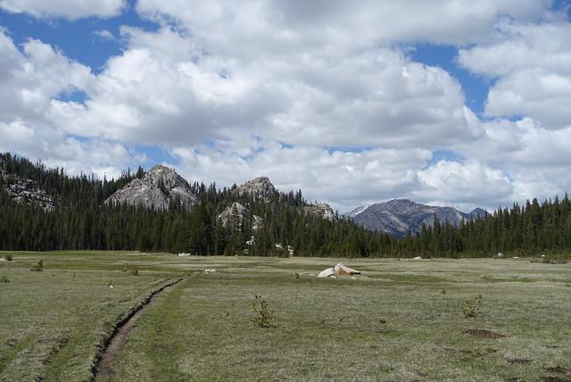 Meadow, m951