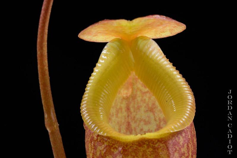 Plantes Phyliok  19507149469_87b34ee21a_c