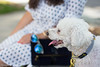 polka dot shirt dress, clare v clutch, dog walking outfit-13.jpg by LyddieGal