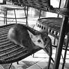 The kitty says hello #shotoniphone #ig
