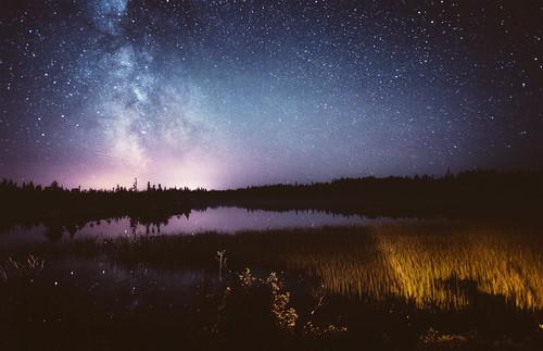 Night Sky & Treeline 2