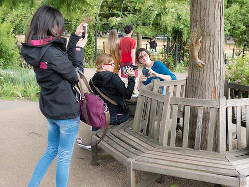 A Squirrel in Hyde Park