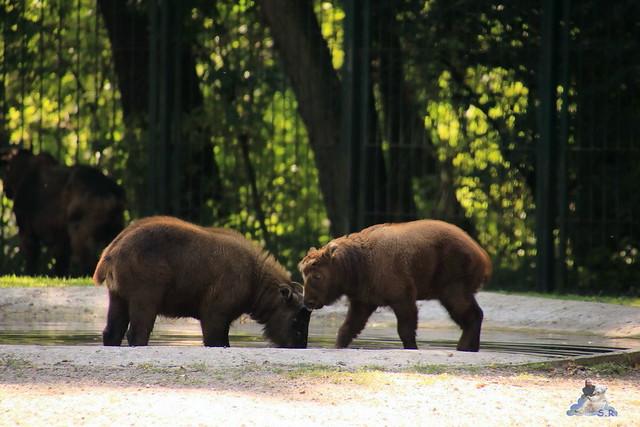 Tierpark Berlin 02.08.2015 0215