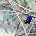Colibri by Juliene Ferraz Lomasso Fotografias