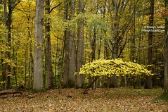 Autumn forest in yellow