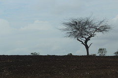 Bosque Guayas