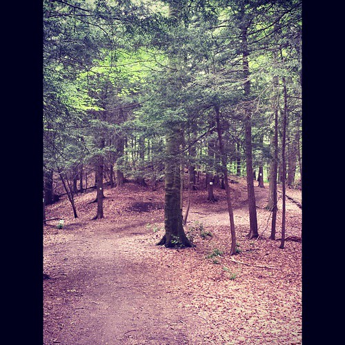 Sprague Brook Park trail #SpragueBrookPark #wny #instashot #nocrop