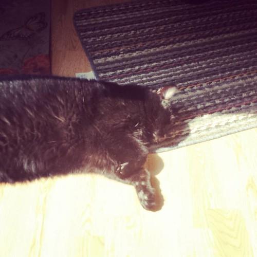 Suncat #Julio #CatsOfInstagram