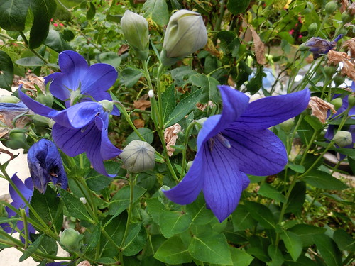 2015-07-24 15.55.20 fleurs