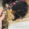 Handshake #viralata #dog #cachorro #serranegra #saopaulo