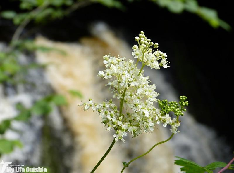 P1150068 - Ingleton Waterfalls