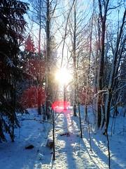 Winter Forest Stockholm